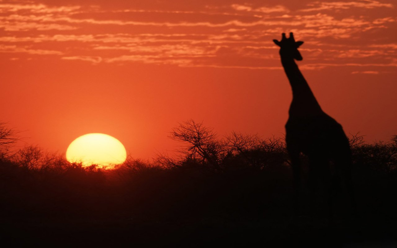 Dall'Africa con amore: l'ennesima frode informatica