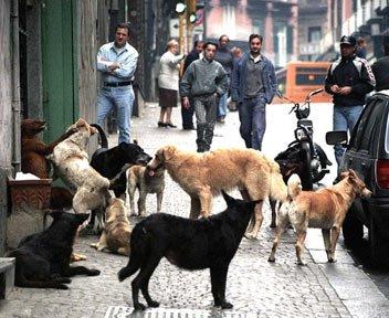 Cani randagi: risarcimento a chi viene morso o attaccato