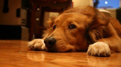 Animali e condominio: l'assemblea può limitare il diritto di tenere animali in casa?