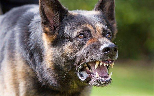 Il padrone di razze di cani pericolosi è responsabile per omicidio