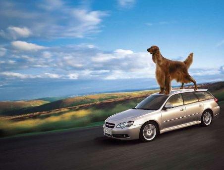 Incidente stradale: quando la colpa è del cane