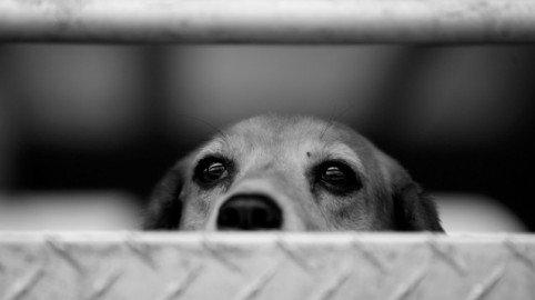 Contro la vivisezione di milioni di animali: a Roma la manifestazione