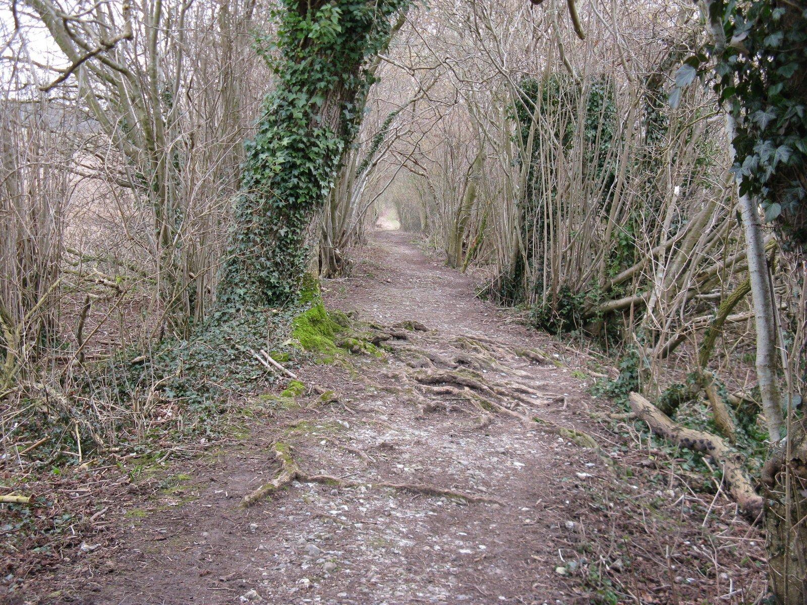 Il proprietario degli alberi è responsabile per i danni causati dalle radici