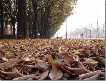 Slittare sull'asfalto a causa di foglie e acqua: a risarcire è l'Anas
