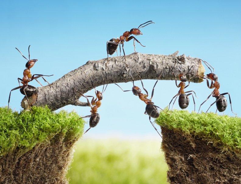 Trust e fondo patrimoniale: differenze e affinità