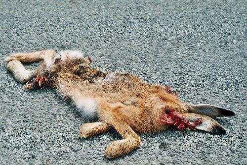 Obbligo di soccorrere gli animali investiti: è legge