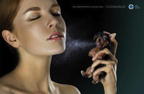 Cosmetici: divieto di sperimentazioni sugli animali, nuove etichette, nuovi simboli