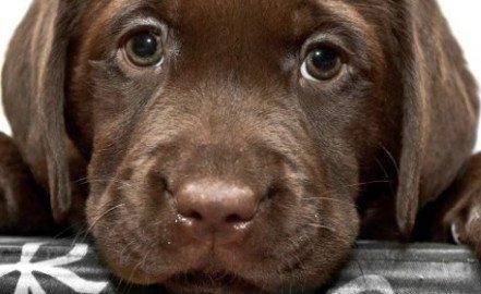 Pronto soccorso veterinario: come funzionano?