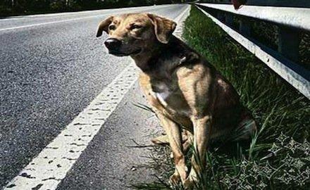Cane sull'autostrada: risarcisce l'ANAS