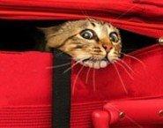 Il pignoramento degli animali domestici nel contesto del - Ufficiale giudiziario pignoramento ...