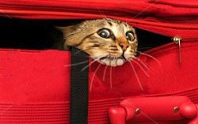 Animali domestici, cani e gatti: pignoramento vietato
