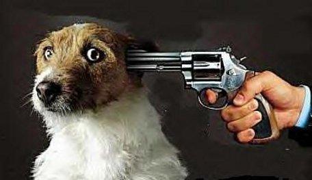 Carcere per chi uccide un animale per odio verso il padrone