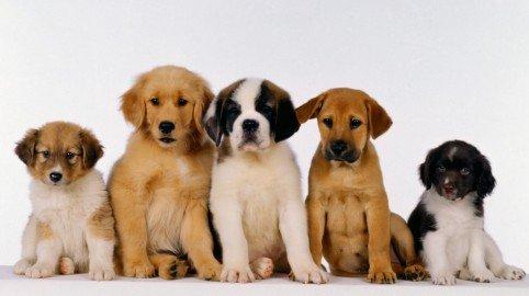 Da oggi il tuo cane può venire a trovarti in ospedale anche se il regolamento lo vieta! Sentenza storica a Varese