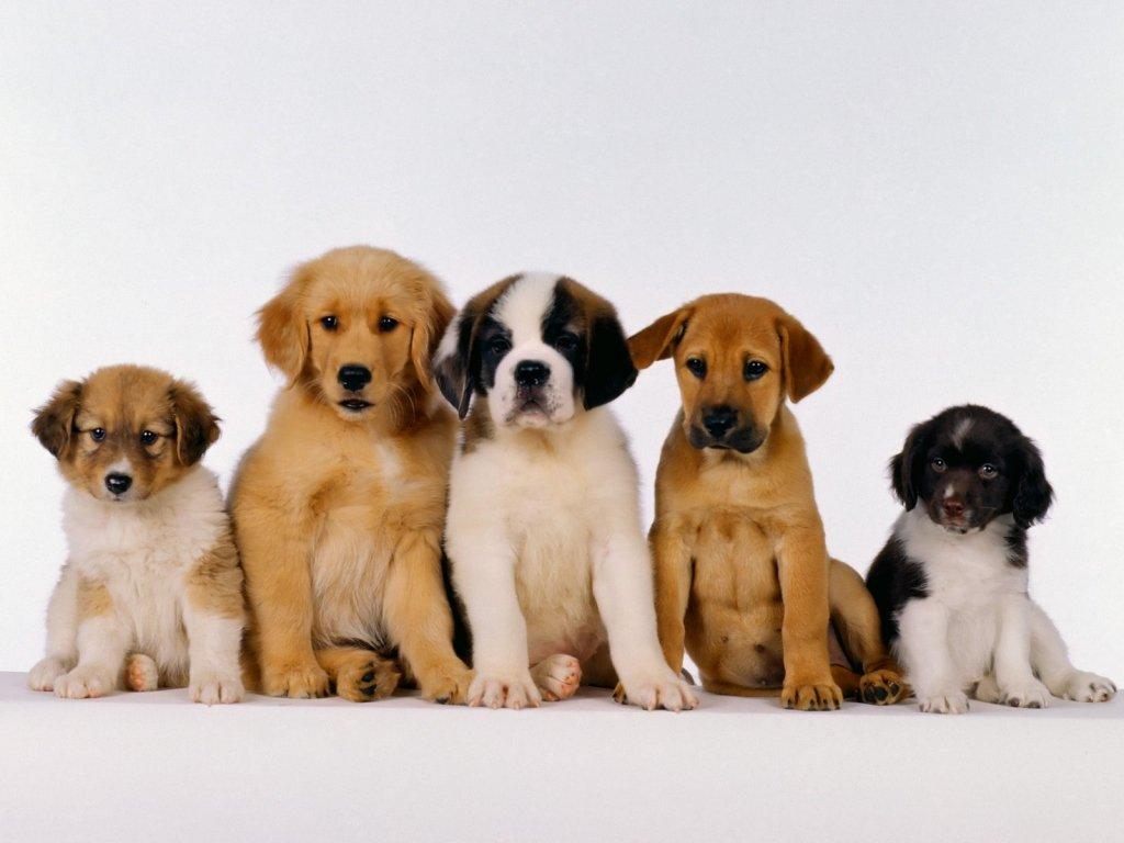 Il cane morde d'istinto chi gli calpesta la coda: padrone responsabile