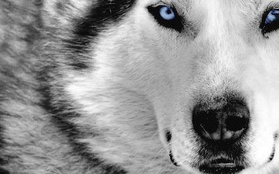 Aggressione dei cani: nuove norme per l'incolumità pubblica