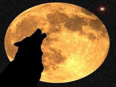 Morso del cane e responsabilità del padrone: il recinto può bastare