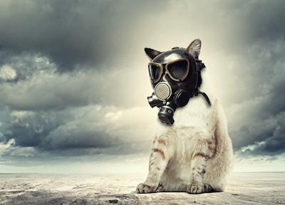 Se il cane del vicino abbaia e disturba, risarcibile il danno da stress e ansia