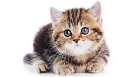 Animali domestici in condominio: l'assemblea non può vietarli. Come opporsi