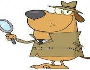 Permessi della legge 104 possibile pedinare il dipendente col detective