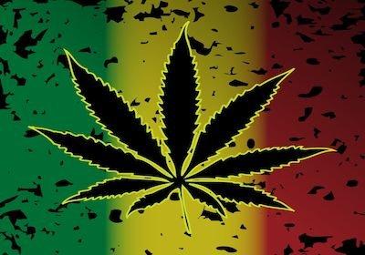 Cannabis coltivata sul terrazzo: niente reato