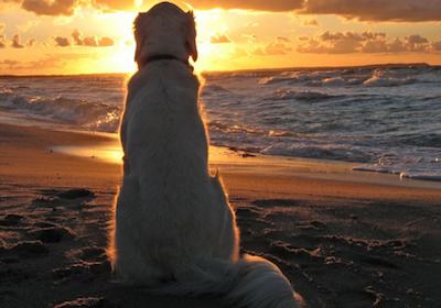Cani in spiaggia: quando è possibile