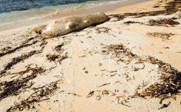 Rifiuti: vietata la rimozione di alghe, meduse e materiali lasciati dalle mareggiate