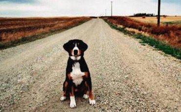 Rumore del cane che abbaia in condominio le regole sono for Cane che abbaia