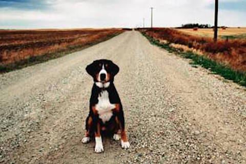 Investimento di un cane e risarcimento: è caso fortuito?