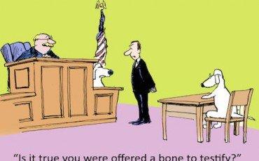 Nuovo processo: l'avvocato assumerà le dichiarazioni di testimoni