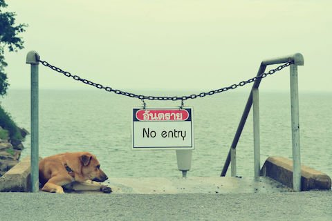 Cani sulle spiagge: nessun divieto