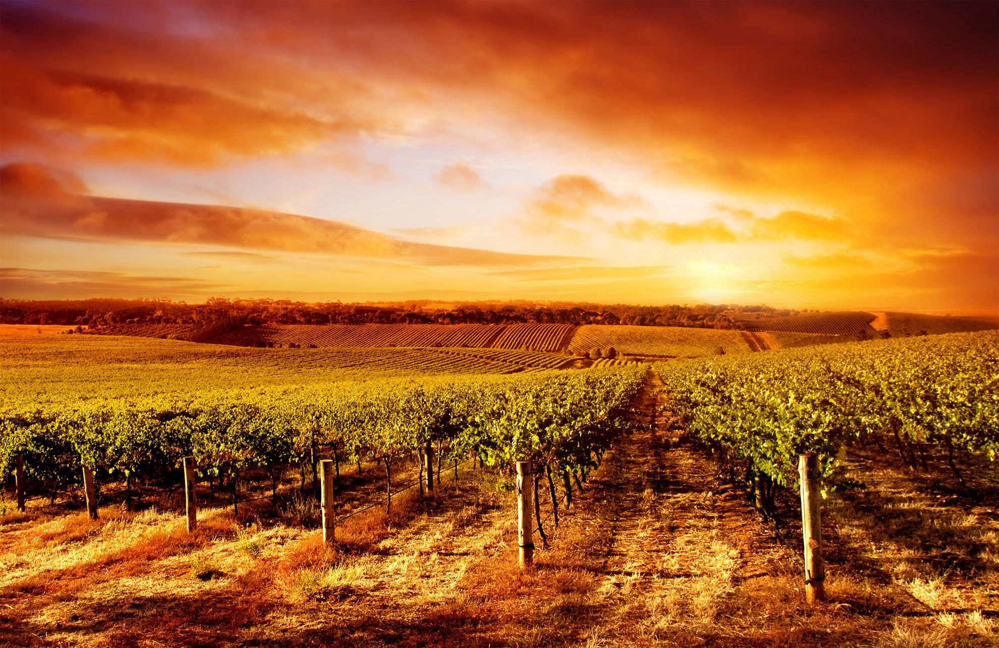 Vendita terreni agricoli ereditati: plusvalenza tassabile?