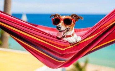 Benefici fiscali per chi ha animali in casa
