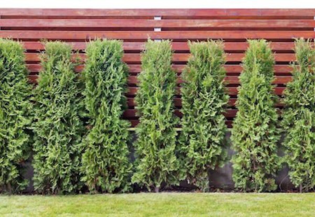 Piante Basse Da Aiuola alberi e siepi: distanza, altezza, potatura e radici