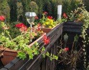 Se sgocciola acqua da vasi e piante del vicino del piano di sopra