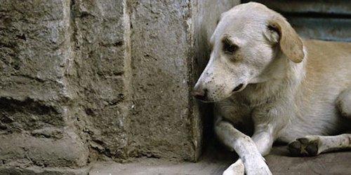 Chi trascura il cane risponde di abbandono