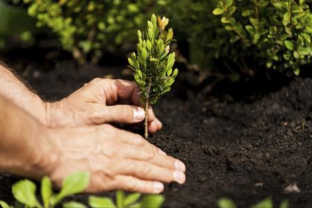 Come inserire piante e alberi nel giardino