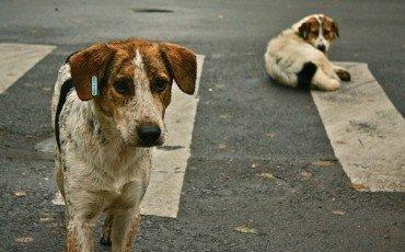 Incidente per cane randagio: più difficile il risarcimento
