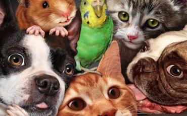 Separazione coniugi: chi ha diritto al cane o al gatto?