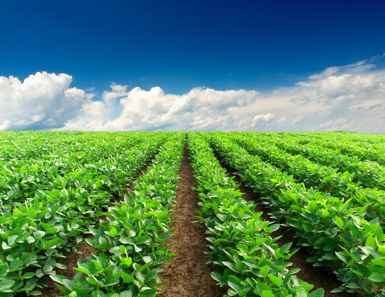 Esenzione IMU terreni agricoli 2016: quando si applica