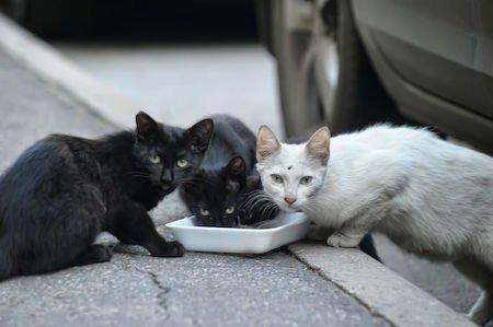 Dare da mangiare ai gatti randagi e sporcare il cortile è vietato