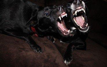 Cani randagi: per l'aggressione risarcisce l'azienda sanitaria