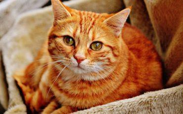 Morte di un animale domestico: diritto al risarcimento?