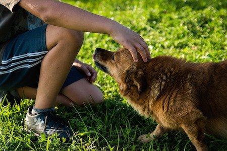 Se il cane morde chi lo accarezza chi è responsabile?