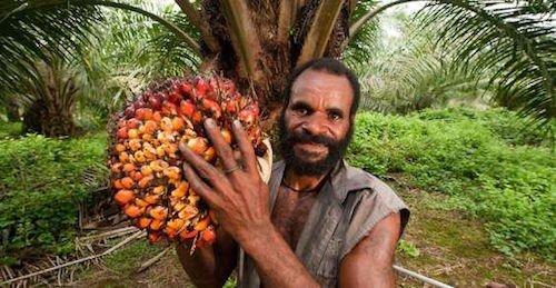 Olio di palma pericoloso?