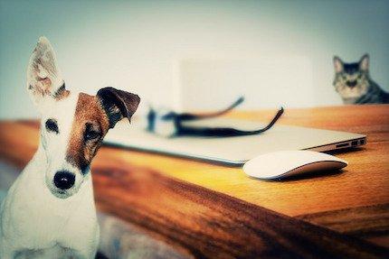 Animali in condominio: è lecito vietarli?