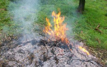 È reato bruciare rami e sterpaglia?