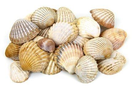 Conchiglie, sabbia, fiori: quali materiali è vietato raccogliere?