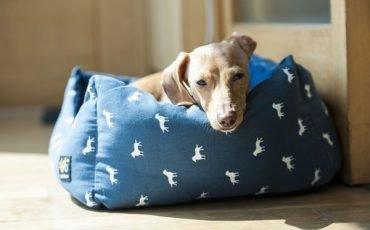 Cani: i costi legali che sostiene il proprietario