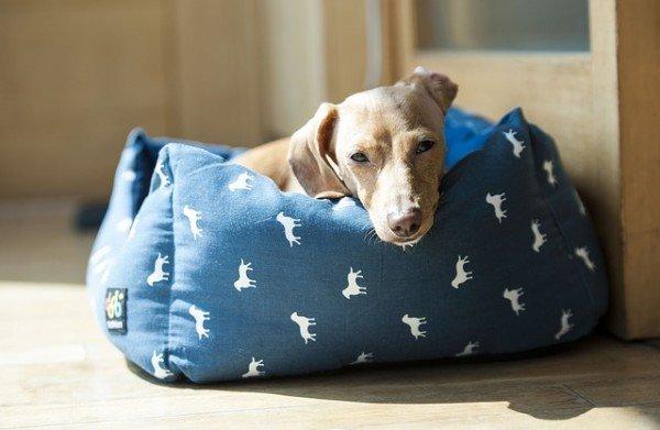 Inquilini senza contratto: possono tenere il cane?