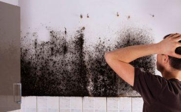 Danni da umidità derivanti dai muri del palazzo condominiale